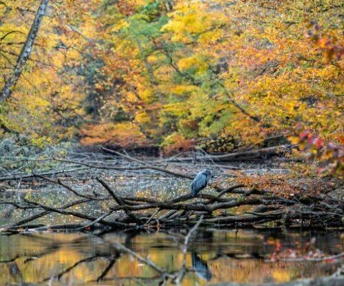 Bird sitting on lake in the fall