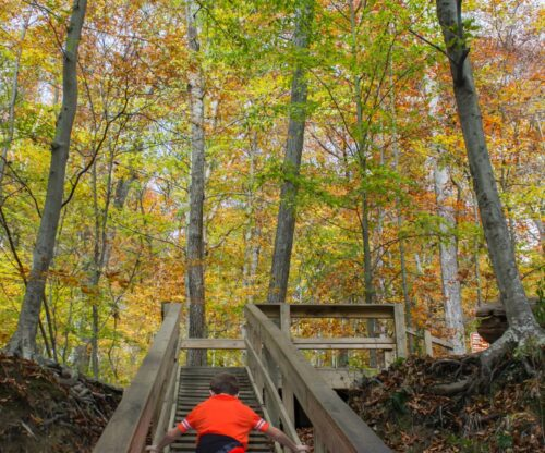 Hiking up stairs in the woods